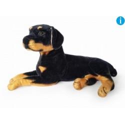 Pies rotwailer 47cm