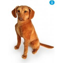 Pies wyżeł węgierski 44cm