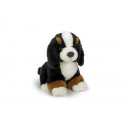 Pies berneński siedzący 20cm