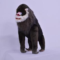Małpa mandryl 75cm