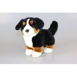 Pies berneński 23cm