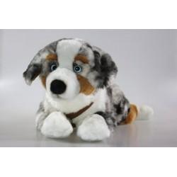 Pies australijski 61cm