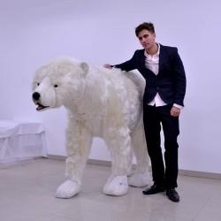 Niedźwiedź polarny 230cm
