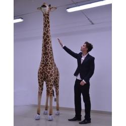 Żyrafa 280cm