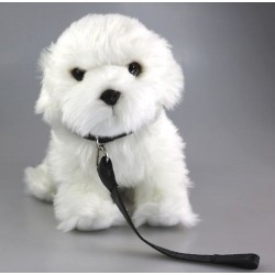 Pies maltańczyk 27cm