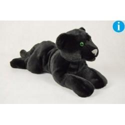 Czarna pantera 48cm