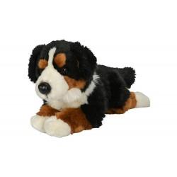 Pies berneński pasterski