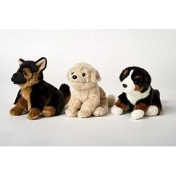 Pies Mix (owczarek,...