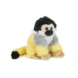 małpa kapucynka