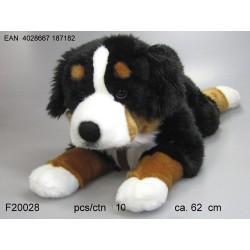 Pies berneński 60cm
