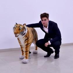 Tygrys brązowy 125cm
