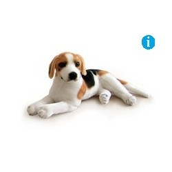 Pies beagle  47cm